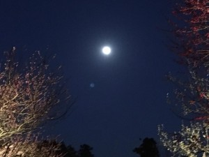 水戸の偕楽園は梅が満開 夜の観梅が満月でした